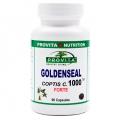 Goldenseal Coptis C  Forte  - antioxidant, antiparazitic, antifungic, antibacterian, antiviral, anticancerigen