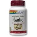 Garlic (Usturoi)  - pentru sistemul cardiovascular, gastrointestinal, respirator si imunitar